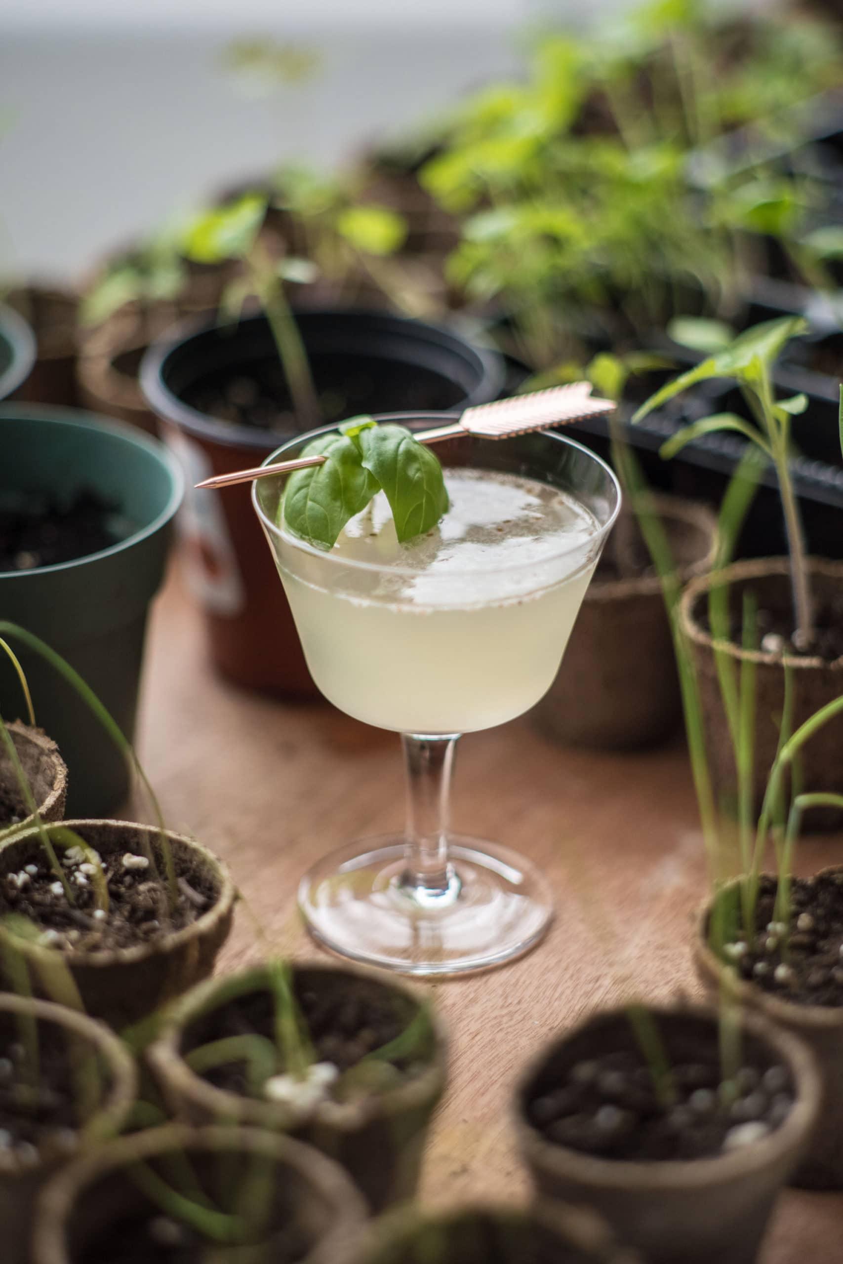 the-little-gardener's-cocktail